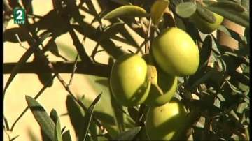 Все повече хора отглеждат екзотични растения в домовете си