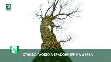 Отново глобиха бракониери на дърва