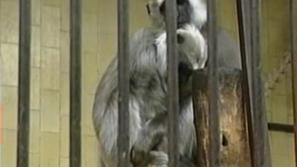 Проблеми в Софийската зоологическа градина заради липсата на газ
