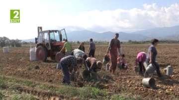 Наемат общински земи в Кюстендил
