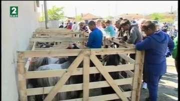 Няма пазар за агнета и ярета от редките породи в Благоевградскo