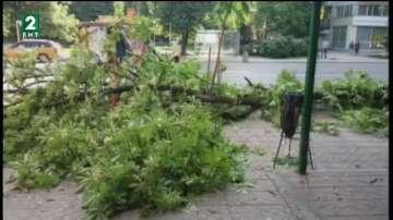 Клон падна и удари жена в Русе, от общината проверяват дърветата