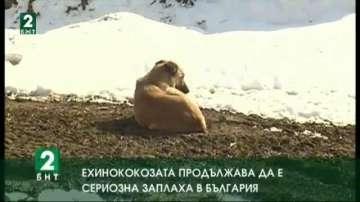 Ехинококозата продължава да е сериозна заплаха в България