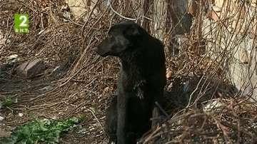 Ловец ще хваща бездомните кучета във Велинград