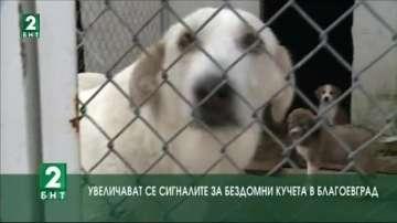 Увеличават се сигналите за бездомни кучета в Благоевград