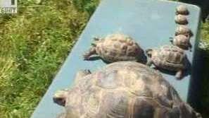 Дом за костенурки