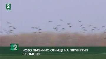 Ново първично огнище на птичи грип в Поморие