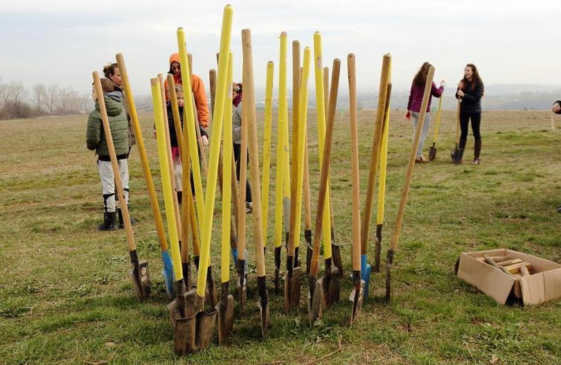 Столичната община търси доброволци за залесяване на гора край Суходол