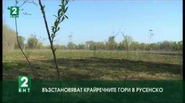 Възстановяват крайречните гори в Русенско