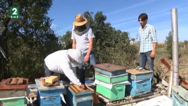 Англичанин пристигна в България, за да учи тайните на пчеларството.