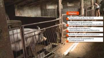 Свиневъдството в България може да се възстанови за две години