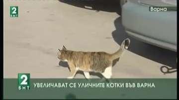 Увеличават се уличните котки във Варна
