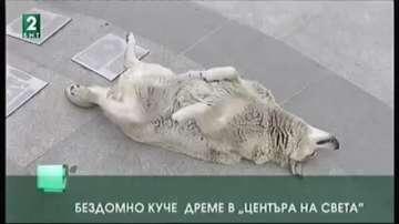 Бездомно куче дреме в центъра на света