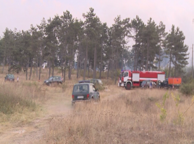 Пожарът, който обхвана борова гора край варненското село Каменар, вече