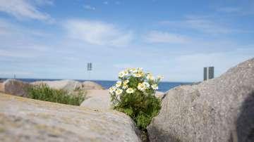 Финландия - зеленото председателство на ЕС, което иска да ви изненада