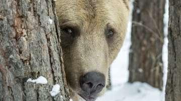 Голяма е вероятността да срещнете мечка на Витоша