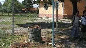 Ученик взриви дърво в училищен двор