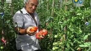 Ден на градинаря