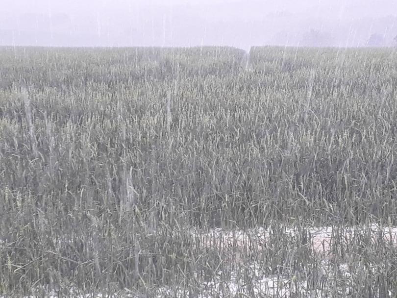 снимка 2 Градушка унищожи насаждения в района на Угърчин