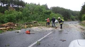 След бурята: Паднали дървета и наводнени пътища