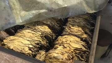 12 работници в нелегалната фабрика за цигари в с. Труд получиха присъди