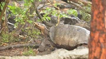 Няма пострадали животни след петролния разлив на Галапагоските острови