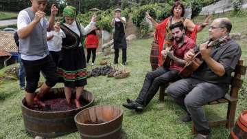 Унгария възстановява славата на вината от Токай