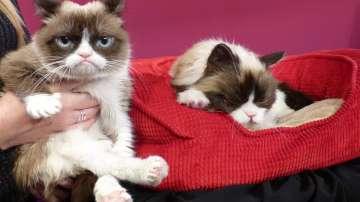 Най-известната сърдита котка в света почина