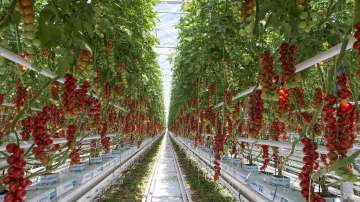 Фонд Земеделие изплати допълнителни 3 млн. лева на биопроизводители