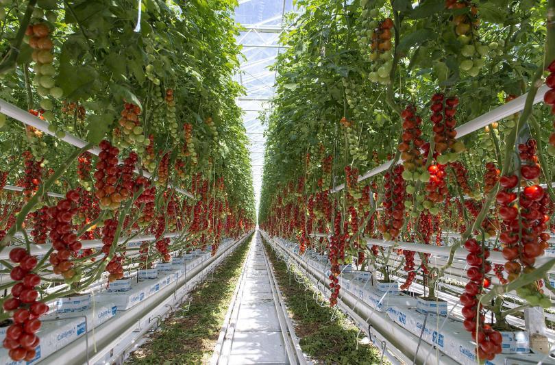 фонд земеделие изплати допълнителни млн лева биопроизводители