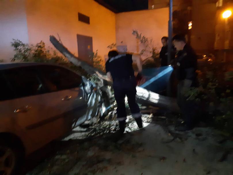 снимка 1 Дърво се стовари върху кола в Пловдив, няма пострадали (СНИМКИ)