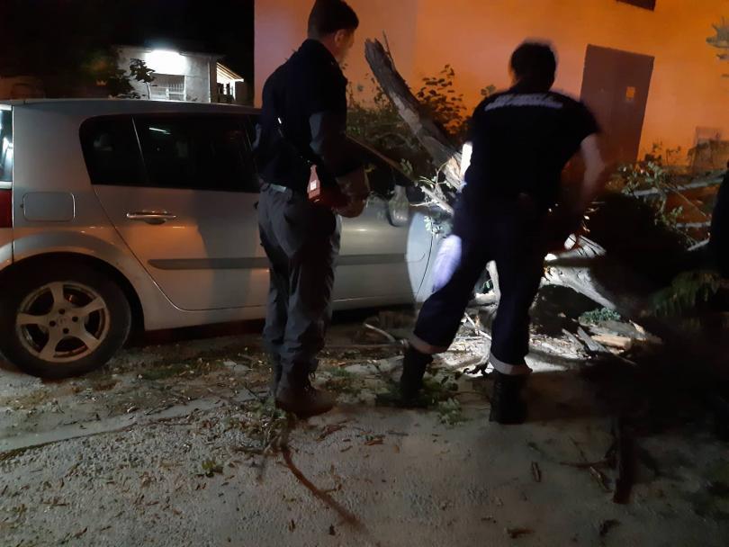 снимка 4 Дърво се стовари върху кола в Пловдив, няма пострадали (СНИМКИ)