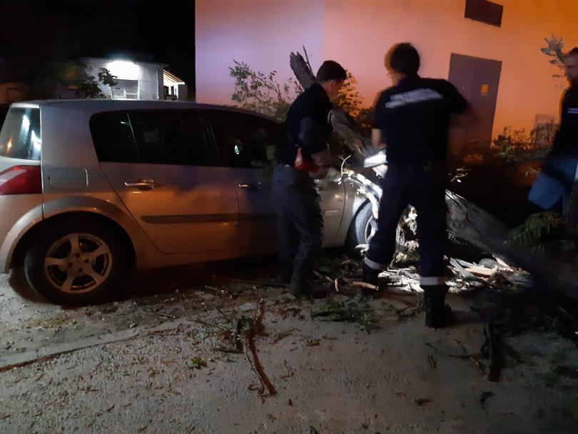 снимка 5 Дърво се стовари върху кола в Пловдив, няма пострадали (СНИМКИ)
