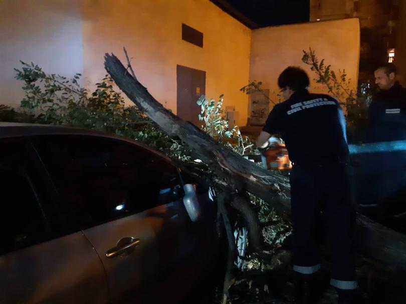 снимка 6 Дърво се стовари върху кола в Пловдив, няма пострадали (СНИМКИ)