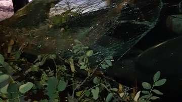 Дърво се стовари върху кола в Пловдив, няма пострадали (СНИМКИ)