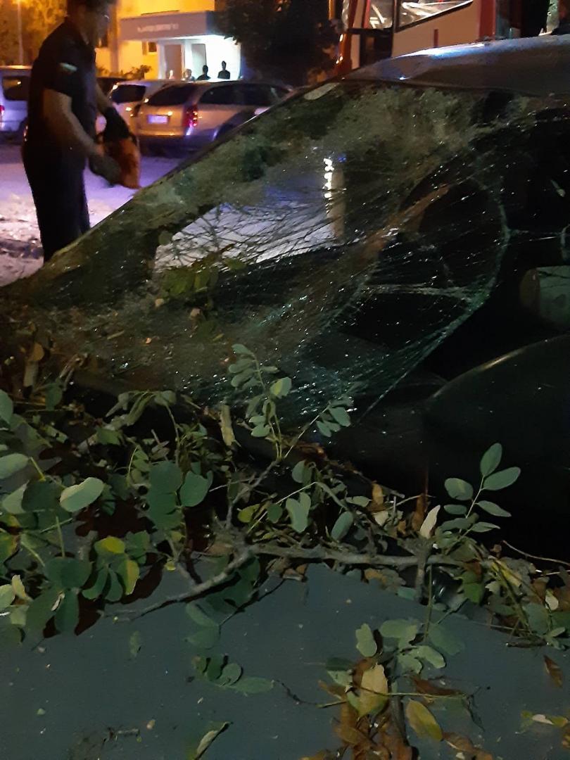 дърво стовари кола пловдив пострадали снимки