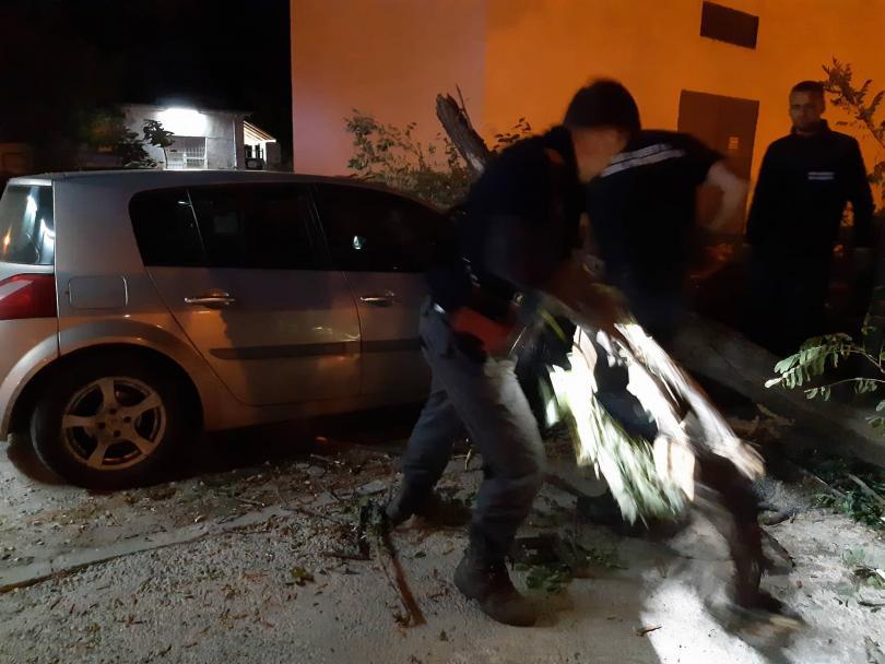 снимка 8 Дърво се стовари върху кола в Пловдив, няма пострадали (СНИМКИ)