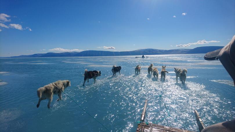 гренландия застрашена рекордно топене леда