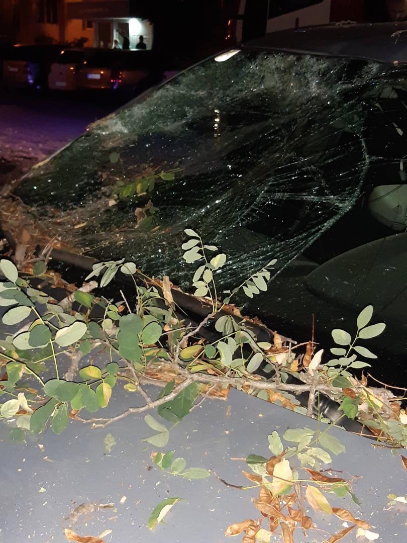 снимка 9 Дърво се стовари върху кола в Пловдив, няма пострадали (СНИМКИ)