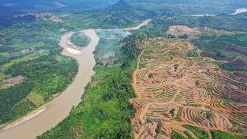 Индонезия обмисля да вдигне митата за палмово масло за ЕС