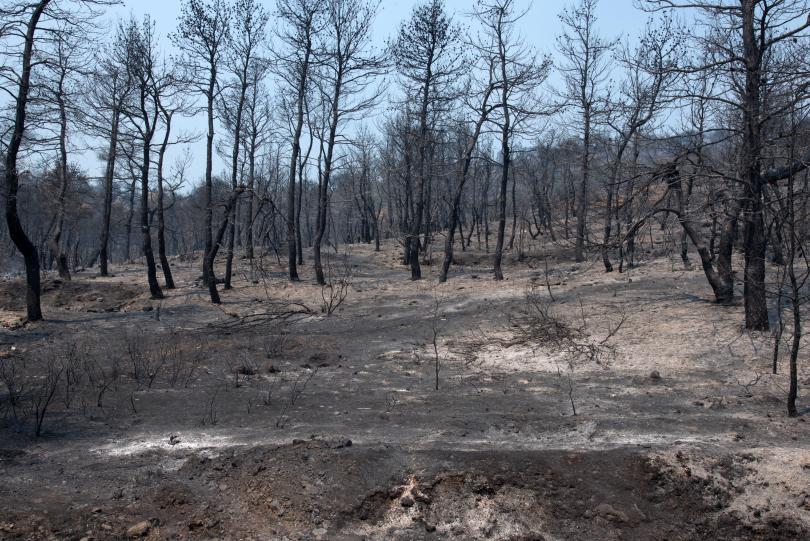 снимка 1 Пожарът на остров Евбея причини екологична катастрофа (Снимки)