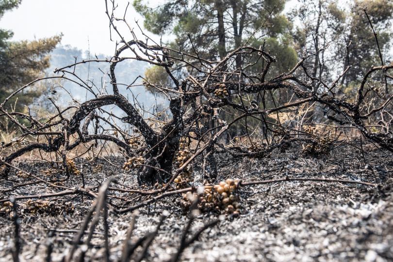 снимка 2 Пожарът на остров Евбея причини екологична катастрофа (Снимки)