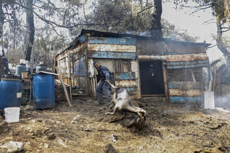 снимка 4 Пожарът на остров Евбея причини екологична катастрофа (Снимки)