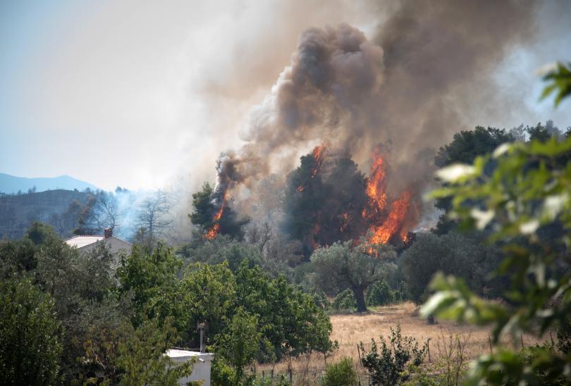 снимка 5 Пожарът на остров Евбея причини екологична катастрофа (Снимки)