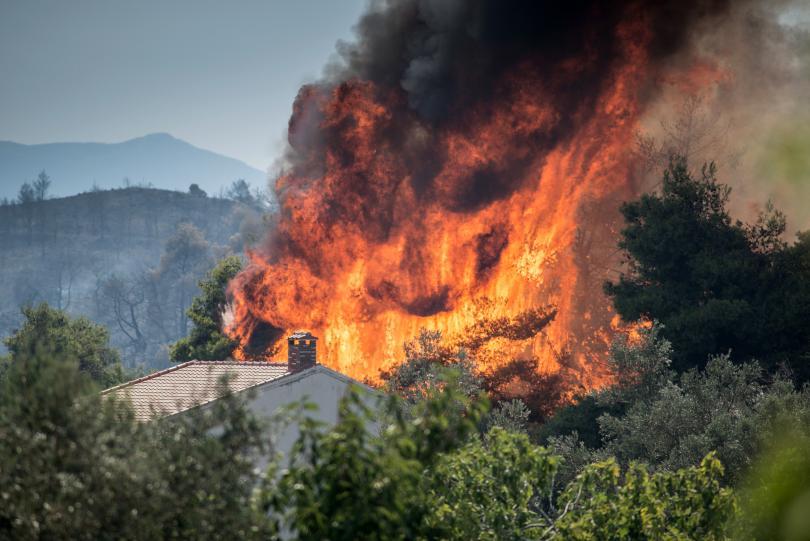 снимка 8 Пожарът на остров Евбея причини екологична катастрофа (Снимки)