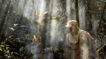 Бразилия забрани контролираното палене на земеделски терени