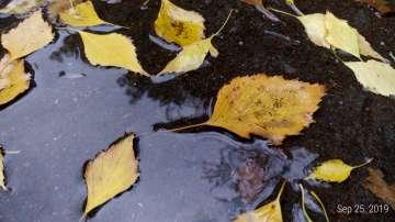 Дъждовно в близките дни