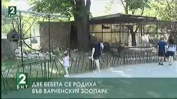Две бебета се родиха във Варненския зоопарк