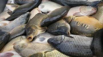 След Никулден: БАБХ насочи за унищожаване 217 кг риба без документи