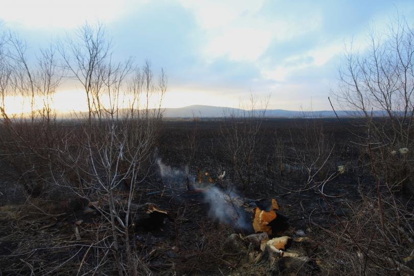 снимка 1 Потушен е пожарът, който обхвана част от Драгоманското блато (Снимки)